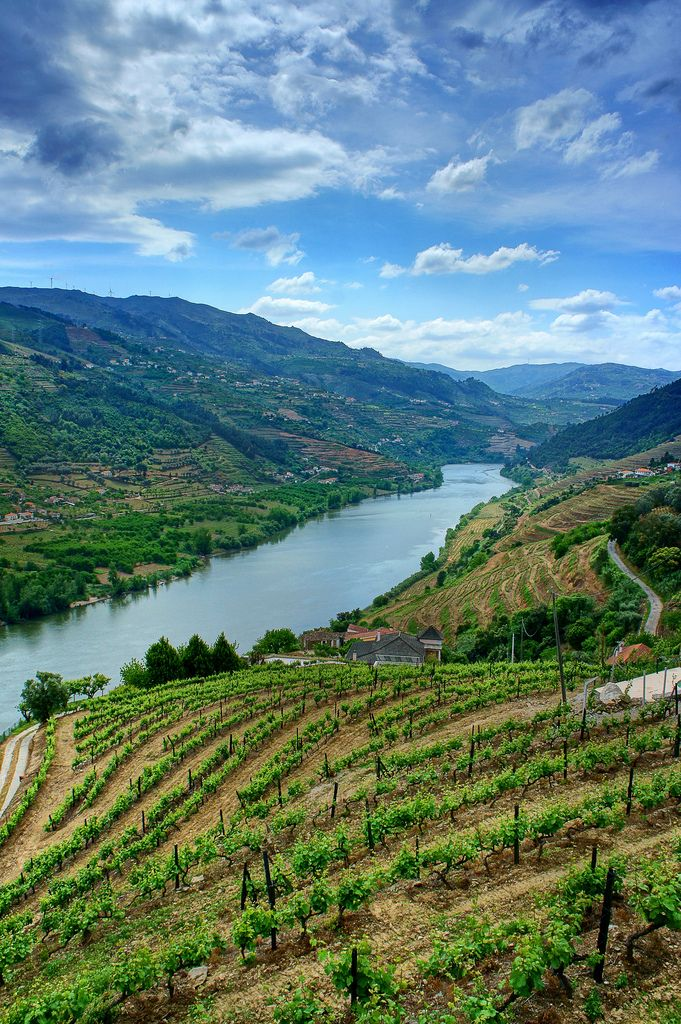 Douro Valley | #Portugal #Dourovalley