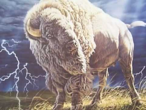 White Buffalo by Cusco (+playlist)