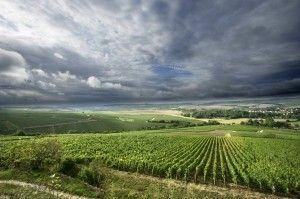 Il Vino Chardonnay: quando l'allegria passa per il Veneto ed il Friuli