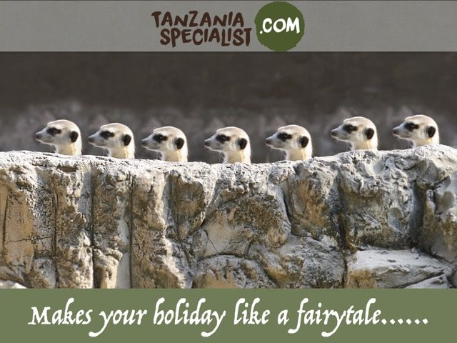 Tanzaina greatest wildlife tourist destination must enjoy a life of movement with Tanzania wildlife national park.