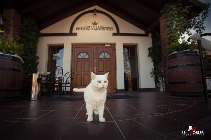 Our security!  #white #cat www.weddingpoland.com