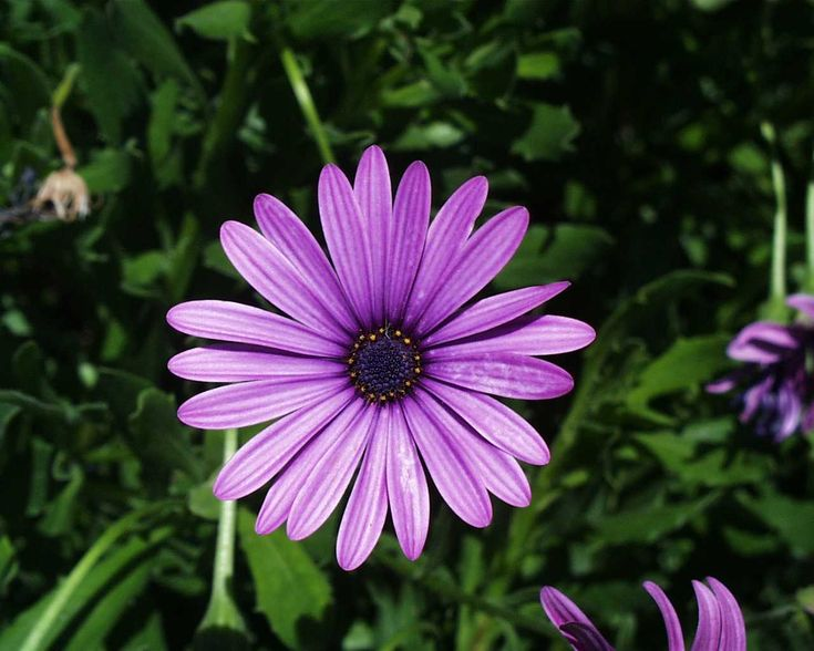 another of my favorite...the daisy.   They symbolize purity, innocence, loyal love, beauty, patience and simplicity