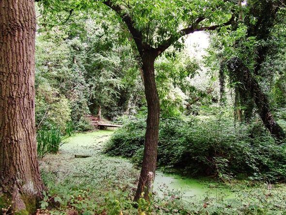 Where the fairies Live? Merrion's Wood,Walsall, England