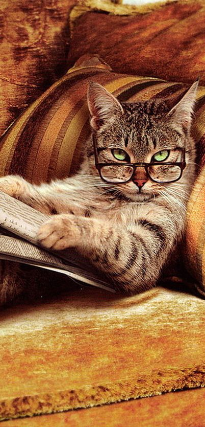 What? Haven't you ever seen a cat reading a newspaper?