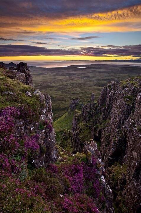"""@Lairdship: Fabulous photograph of heather in bloom, Trotternish Ridge, Isle of Skye.  #Scotland #photography pic.twitter.com/D7az4nHNzc I LOVE"