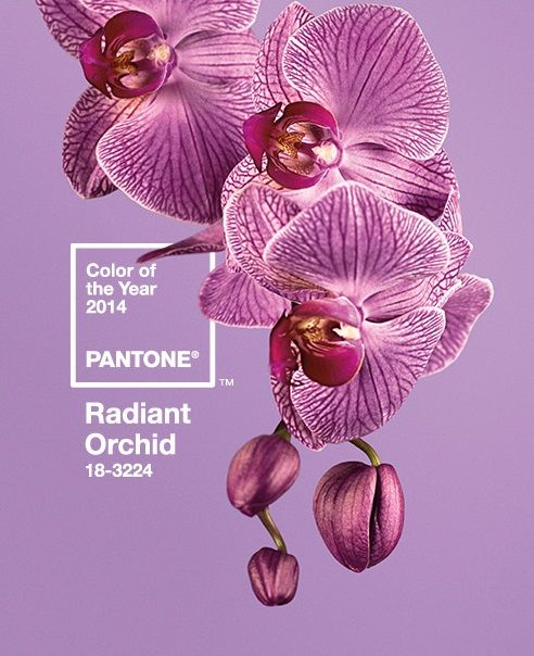 Pantone's 2014 Color of the year is Radiant Orchid!