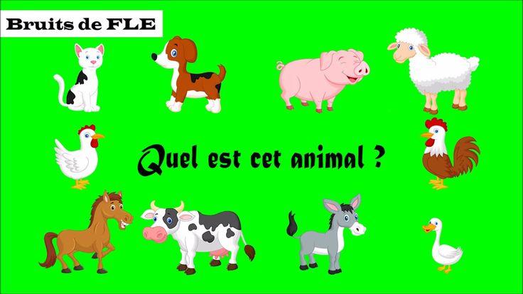 Niveaux A1-A2 : Enseigner/Apprendre les animaux domestiques avec leur cri + Comment nomme-t-on le cri de ces animaux ? (exemple : Le chat miaule.)