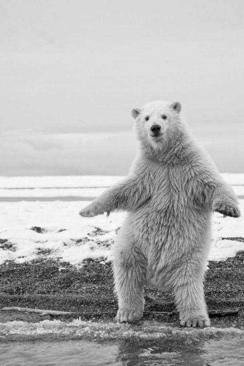 "Dancing Bear.  ""Shake Your Grove Thing"" qb"