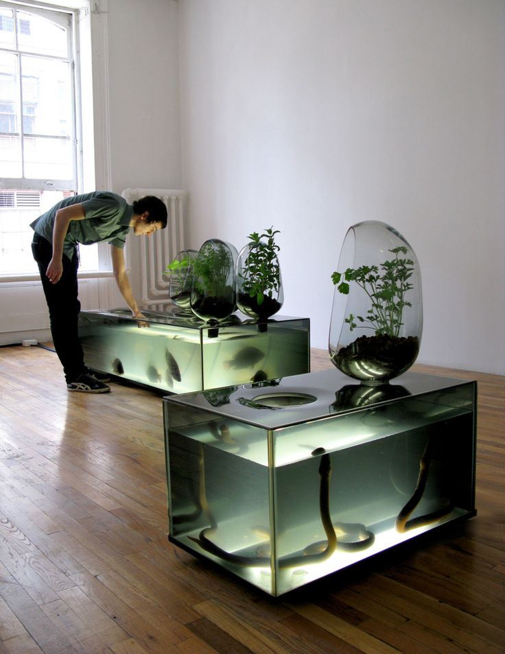 This version of hydroponics uses a refrigerated aquarium as a hatchery for freshwater fish, while vegetables grow on top in glass pods. The vegetables use the water from the fish tank, extract nutrients, filtering and purifying the water for the fish to reuse and develop. For those who don't have the outdoor space to grow their own food, this may be an effective solution to the local food dilemma.    The aquarium was exhibited at the Artists Space in NY.