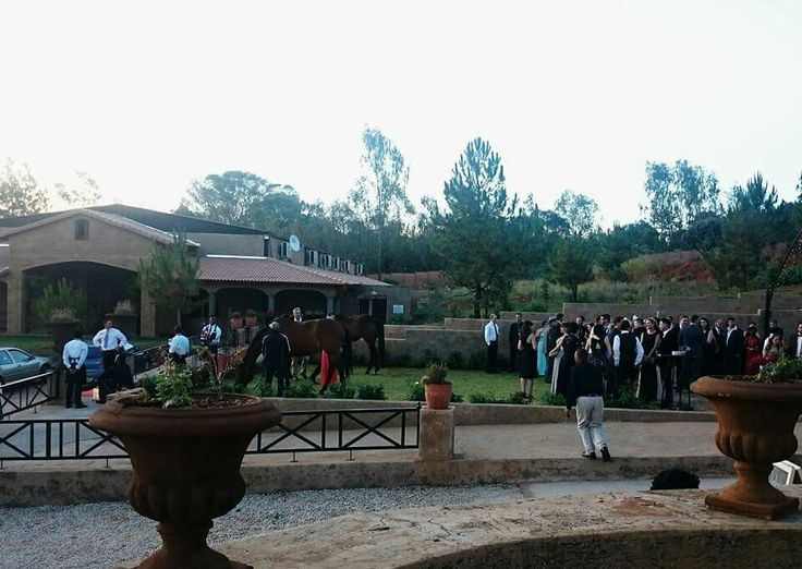Horses meeting guests at Monte de dios