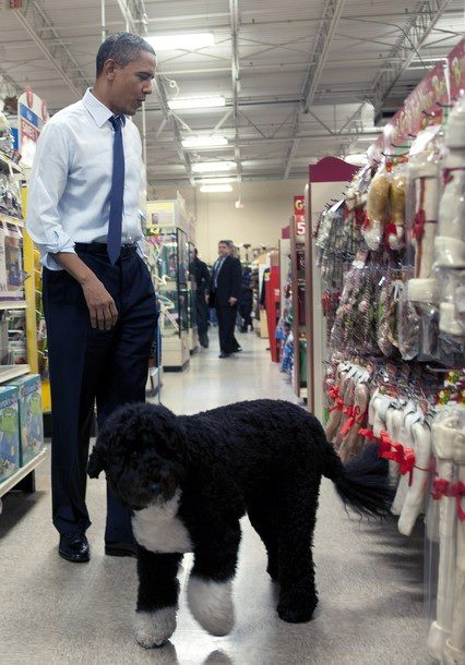 """Shopping with """"First Dog"""" Bo Obama and the Prez."""
