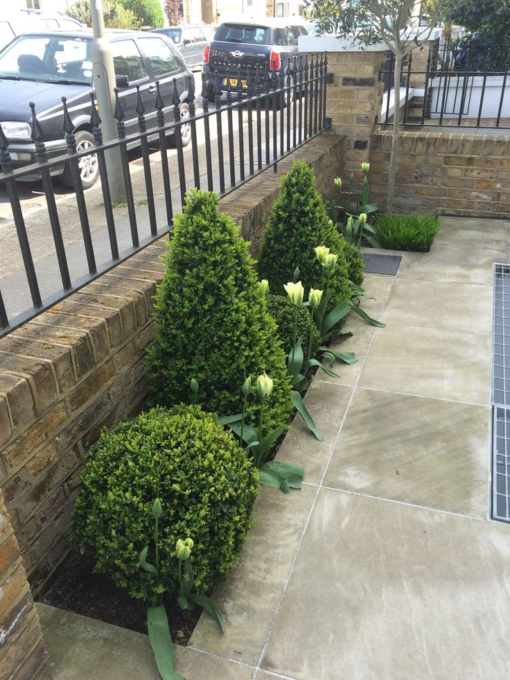buxus box cones and balls with white and green tulips front gardenstulipsgarden ideas