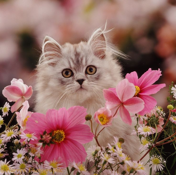 Image result for pink flowers and lovely cats