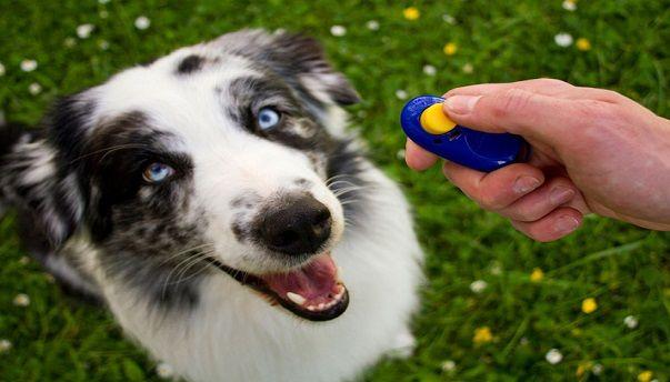 Dog behaviourist Skelmersdale - http://www.dog-ramblers.co.uk/dog-obedience-training-skelmersdale/  #DogBehaviourist