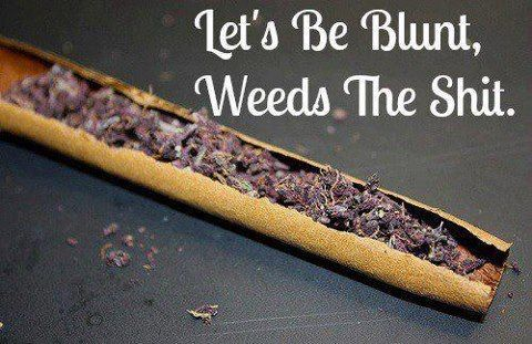 Let's be blunt, weed is the SHIT!