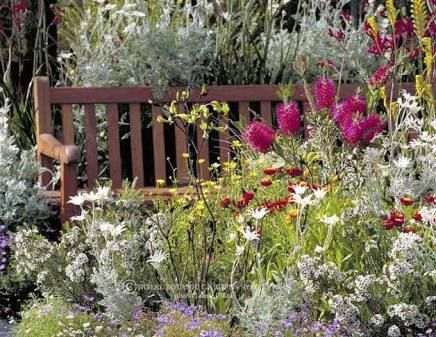 Love the silver foliage and colourful flowers - Native Australian Garden