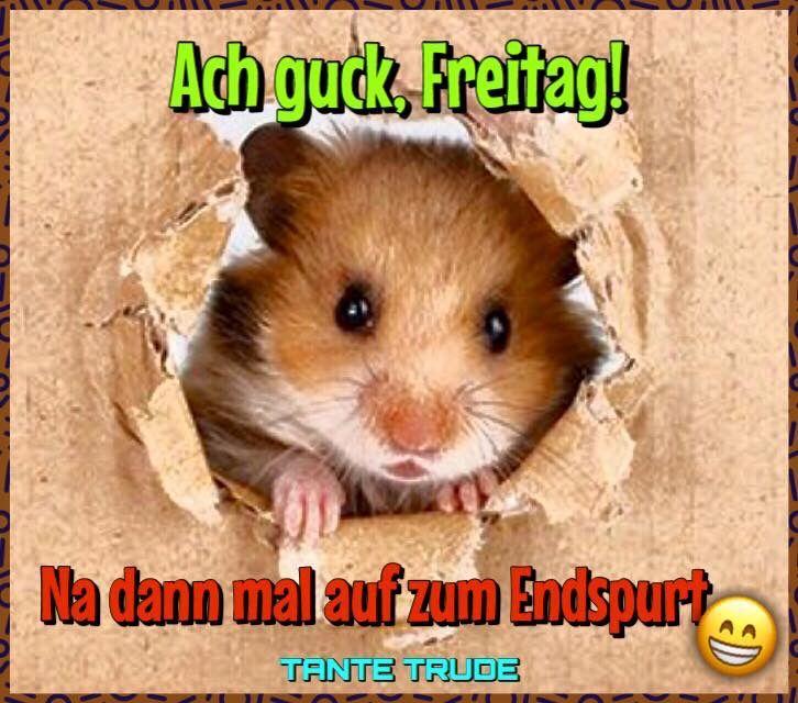 lustige hamster bilder mit spruch