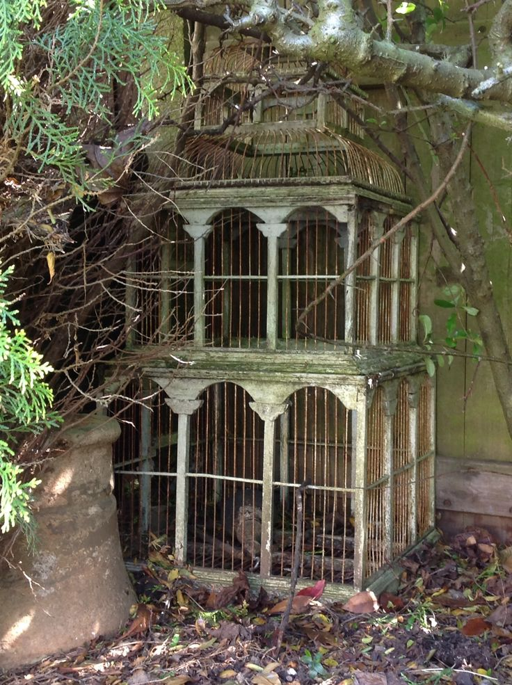Lost | Forgotten | Abandoned | Displaced | Decayed | Neglected | Discarded | Disrepair | Old bird cage