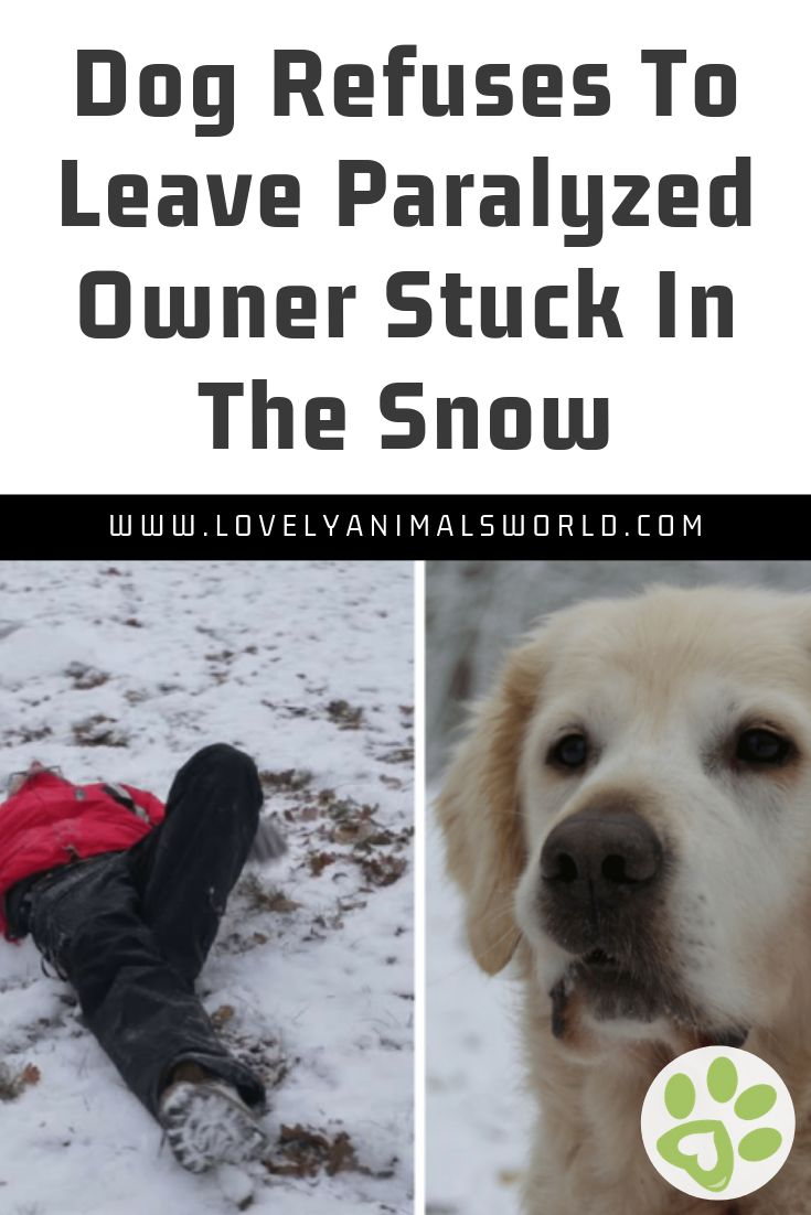 Dog Refuses To Leave Paralyzed Owner Stuck In The Snow