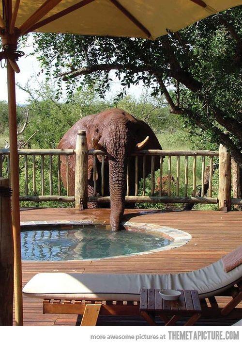 Elephant drinking from hot tub