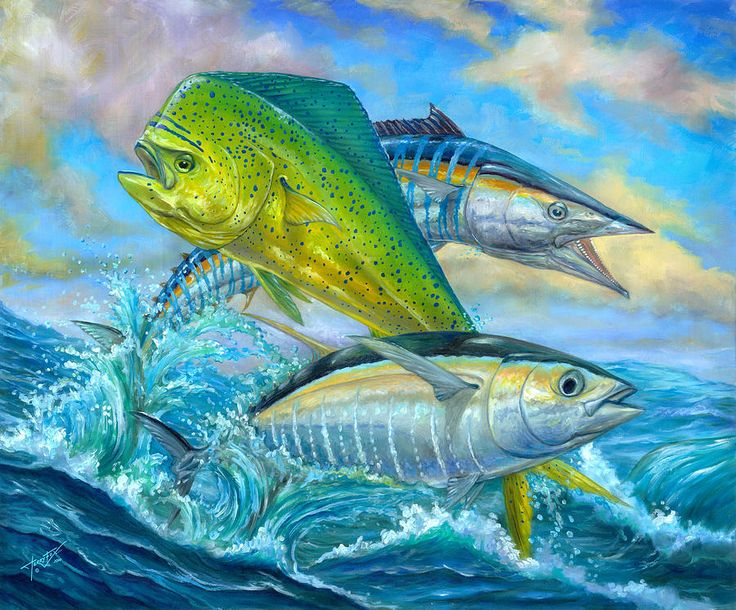Pics For > Mahi Mahi Wallpaper Guy Harvey