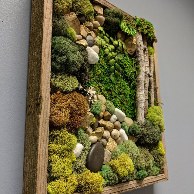 Living Wall Vertical Garden Moss Wall Art 55x22 Aerial Etsy Moss Wall Art Moss Art Moss Decor