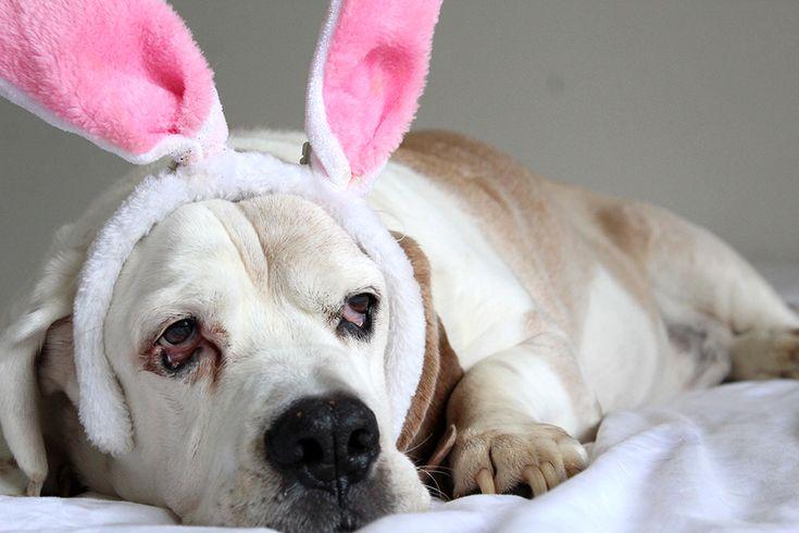 Easter Fun&