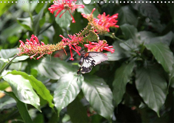 """Tier-Posterbuch """"Schmetterlinge der Tropen"""", Seite 9"""