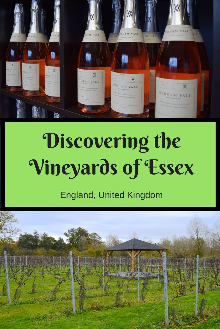 I was recently shown around the vineyards in Essex, United Kingdom  and discovered how amazing English wine is. Find out why I loved the vineyards Essex has to offer.