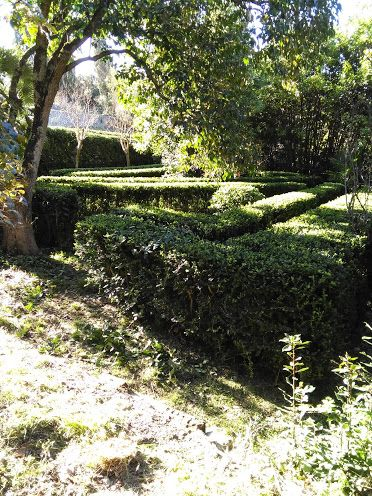 Il #giardino di #Scornello con  il #labirinto di #bosso, tipico dei #giardiniallitaliana, in #agriturismo vicino a #Volterra