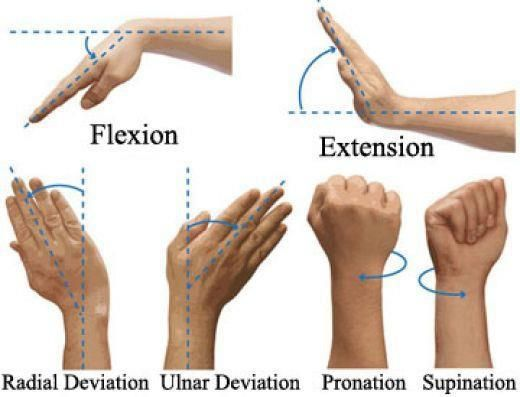 Anatomical names for the basic movements of the wrist.