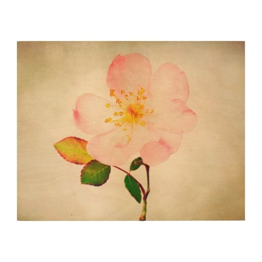 Pink Rose on Wood Canvas