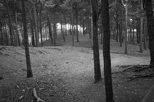 Formby: gwyll yn y coed / Dusky woods | Marc Evans | Flickr
