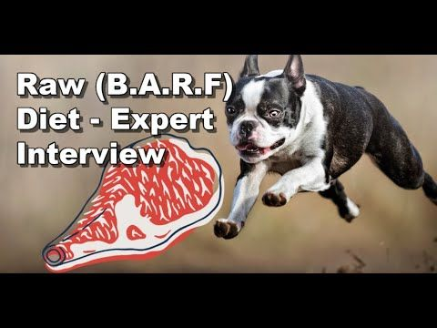 Raw Dog Food Diet 101 How It Can Benefit Boston Terriers Youtube Boston Terrier Raw Dog Food Recipes Terrier