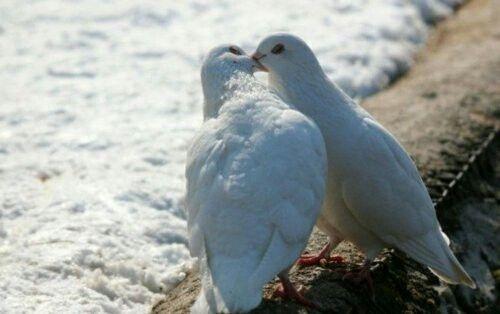 Verliebt sein ist schön