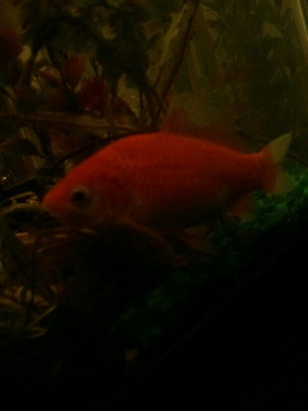 Goldi my goldfish;)