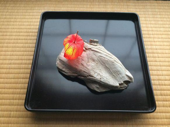 ほうずきライト|土屋孝元