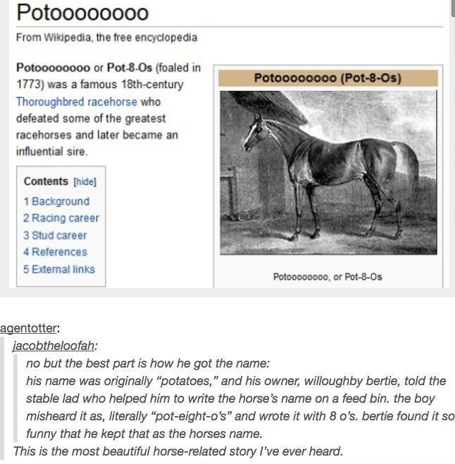 Why was he gonna name his horse Potatoes anyways??