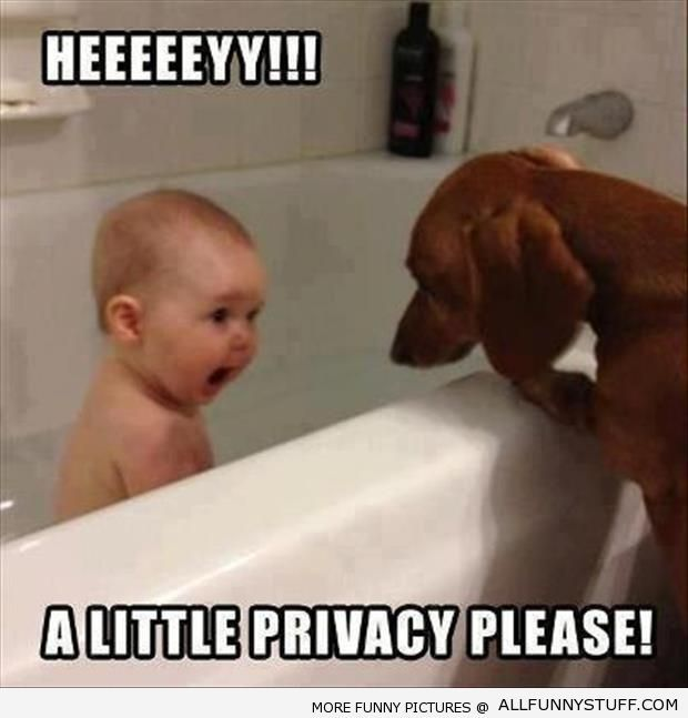 Sad I Miss You Quotes For Friends: 62 Best Images About Dachshund Funny Quotes On Pinterest