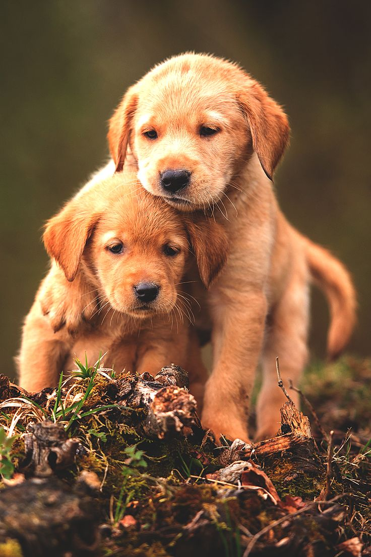 Country Living ~ Puppy Love