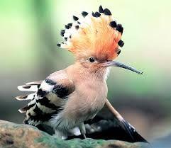 """Képtalálat a következőre: """"költöző madarak"""""""
