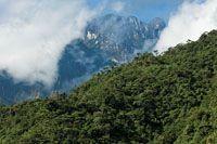 Bosque nublado de relieve escarpado característico del paisaje altoandino.