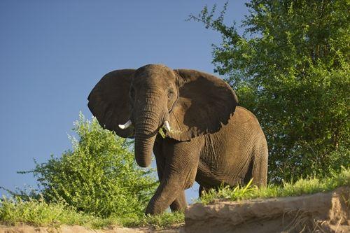 Elephant, Lower Zambezi National Park, Zambia.. viewed from a canoe! Unique wildlife sighting!
