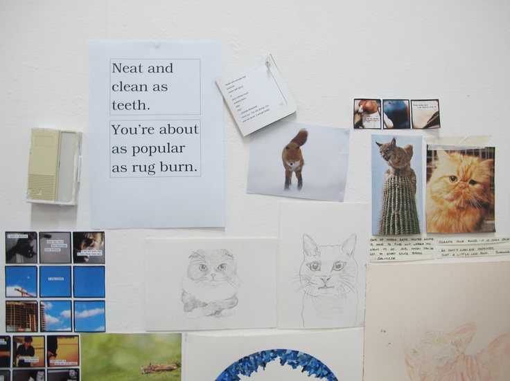 Studio shot including pictures of ugly cats
