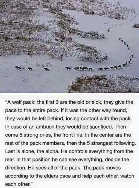 I always did relate myself to being able to observe and see the intruders coming. I like being pack leader. It suits me.