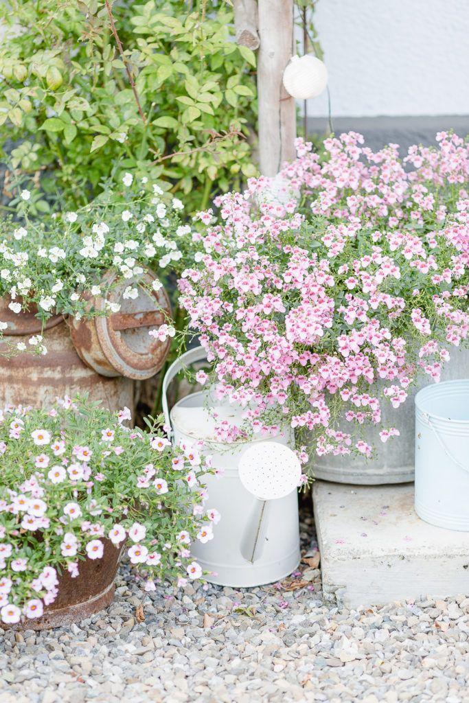 Sommerstauden oder Neues aus meinem Garten