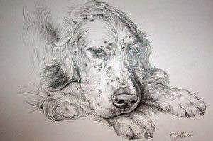 Portrety psów, rysunki ołówkiem