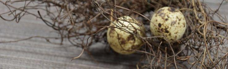 Кому полезны перепелиные яйца натощак? — Диеты со всего света