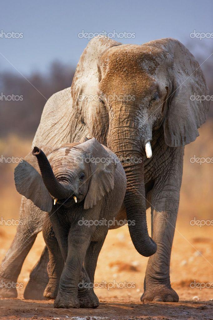 Ребенок слона — стоковое изображение #3972921