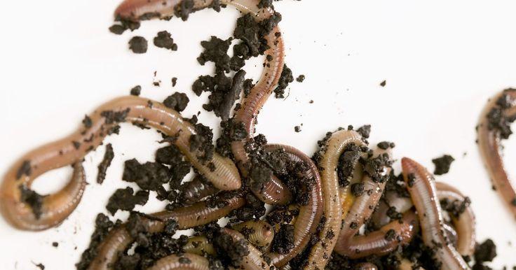 Como fazer um sistema de compostagem com minhocas. Um sistema orgânico de compostagem com minhocas proporciona vários benefícios para o jardineiro de casa. As minhocas transformam restos de cozinha e de jardim em um solo rico e fértil, evitando o desperdício e renovando o seu jardim. Elas também se multiplicam, fornecendo uma fonte de minhocas para vender, manter ou usar no jardim. As minhocas são ...